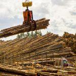 Pleasant River Lumber logs